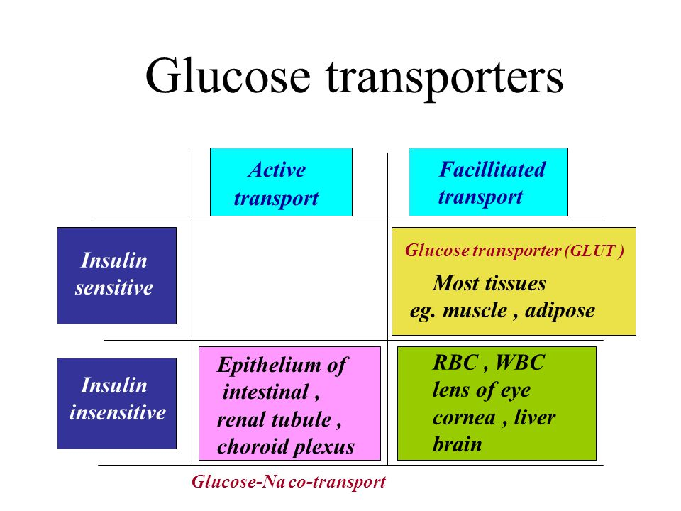 Glucose transporters Active Facillitated transport transport Insulin