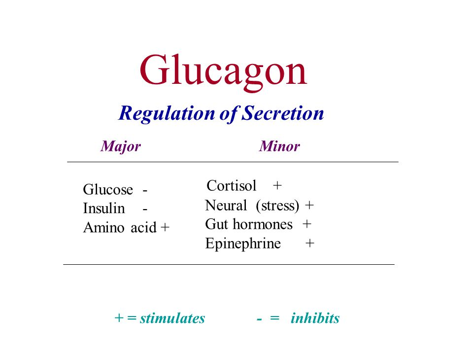 Glucagon Regulation of Secretion Major Minor Cortisol + Glucose -