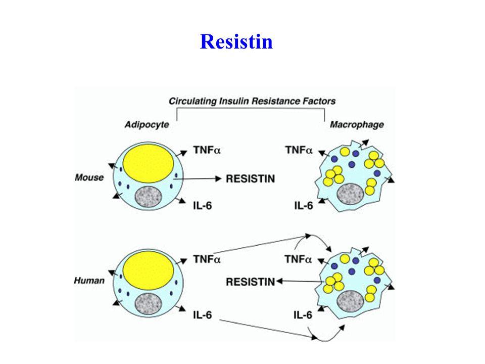 Resistin