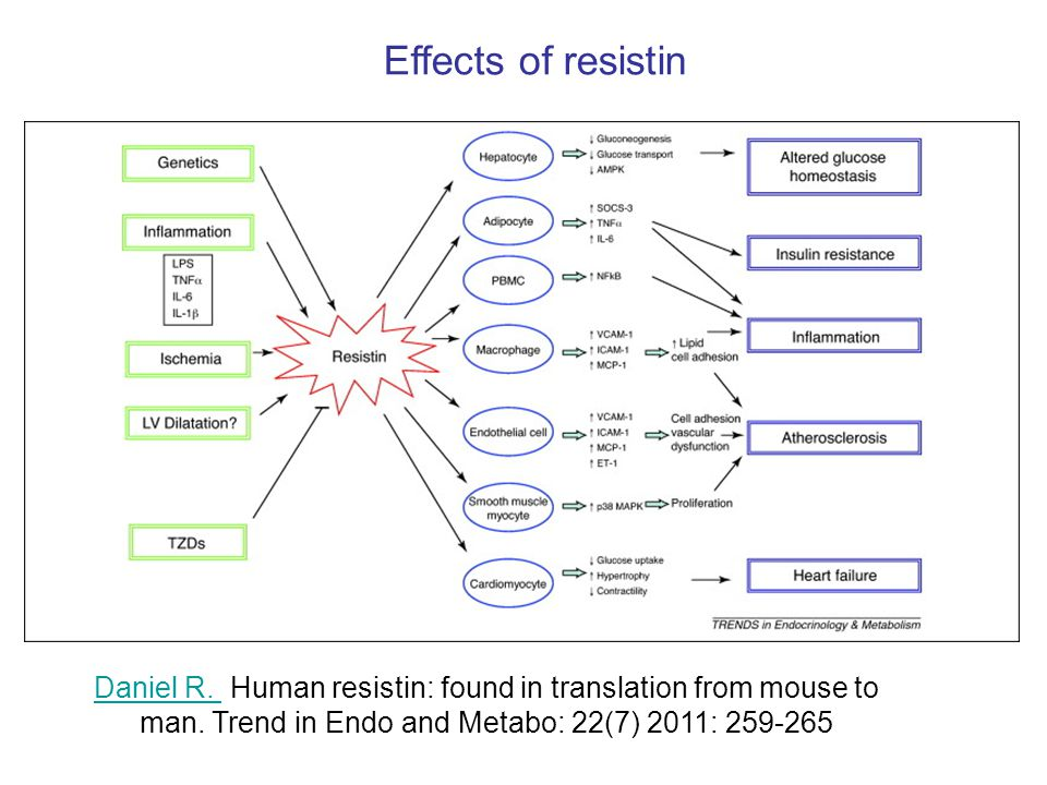 Effects of resistin Daniel R. Human resistin: found in translation from mouse to man.