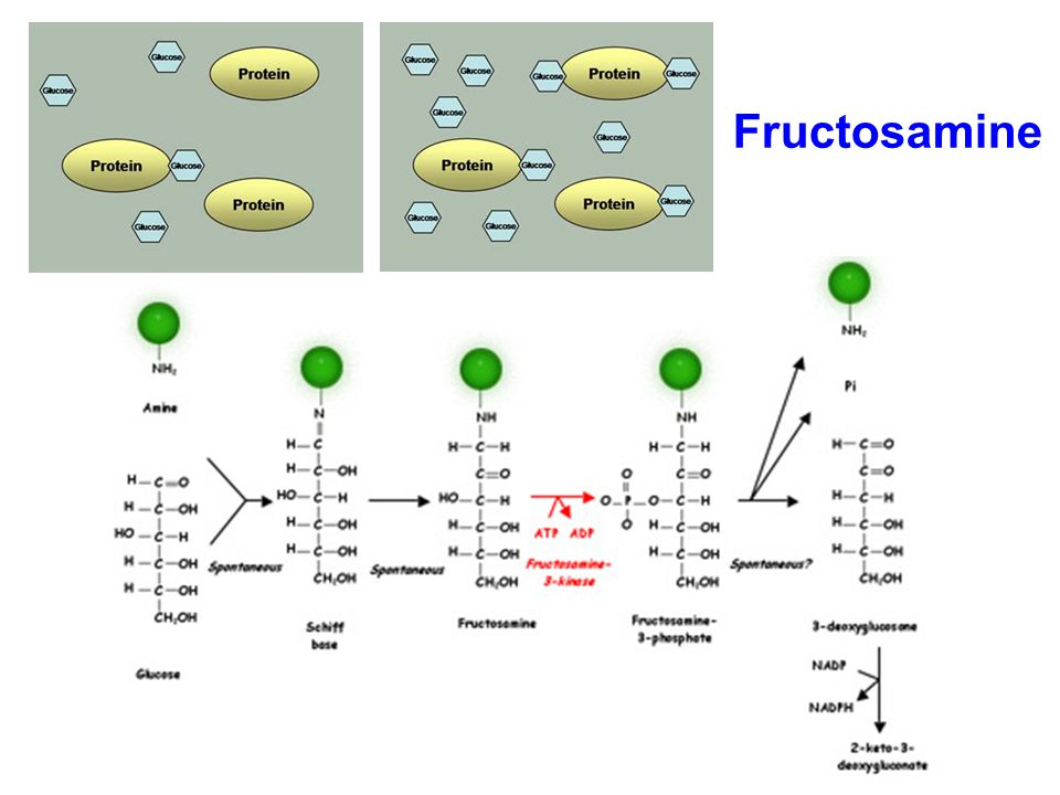 Fructosamine