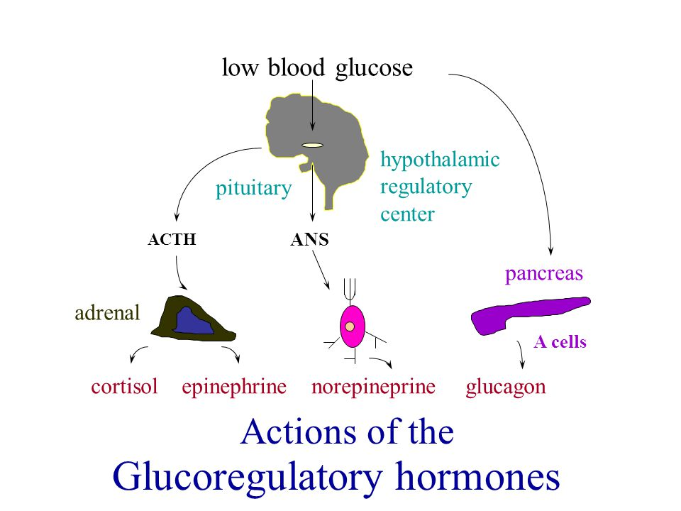 Glucoregulatory hormones
