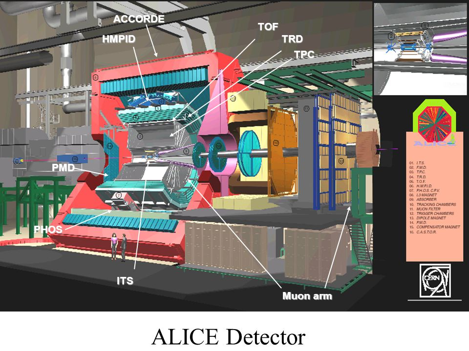 ACCORDE TOF HMPID TRD TPC PMD PHOS ITS Muon arm ALICE Detector