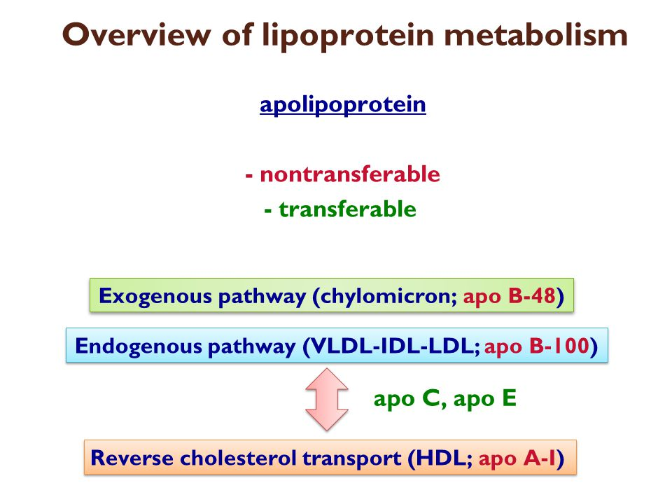 Overview of lipoprotein metabolism