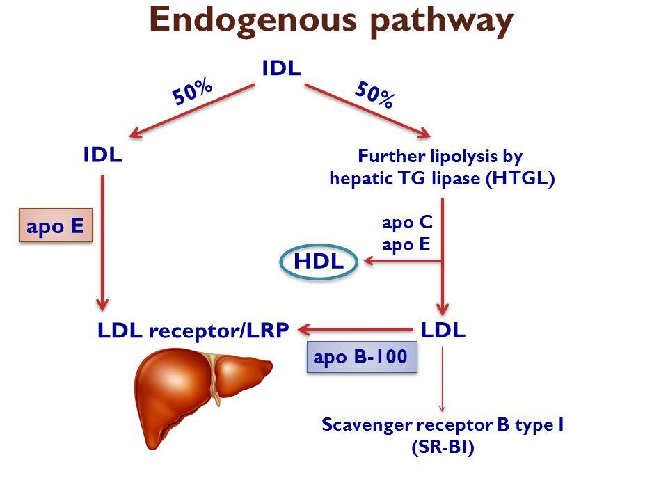 hepatic TG lipase (HTGL) Scavenger receptor B type I (SR-BI)