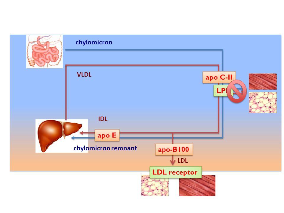 chylomicron VLDL apo C-II LPL IDL apo E chylomicron remnant apo-B100 LDL LDL receptor