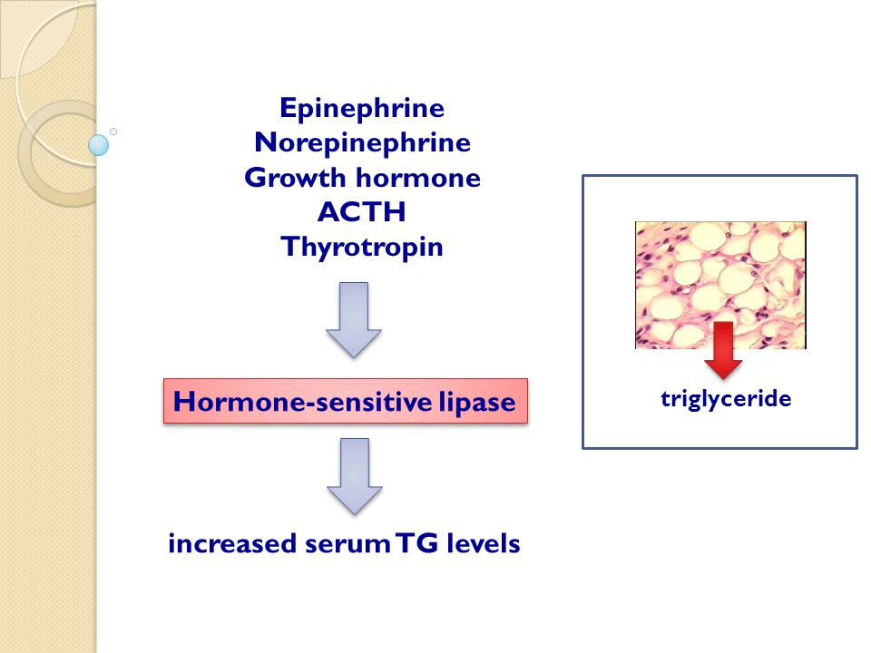 increased serum TG levels