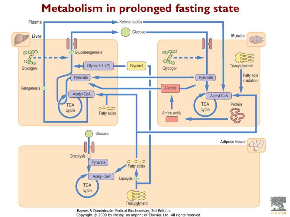 Metabolism in prolonged fasting state