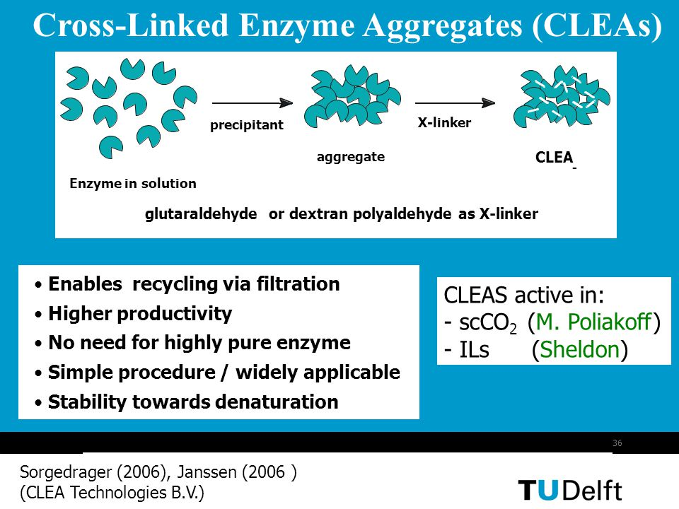 Cross-Linked Enzyme Aggregates (CLEAs)