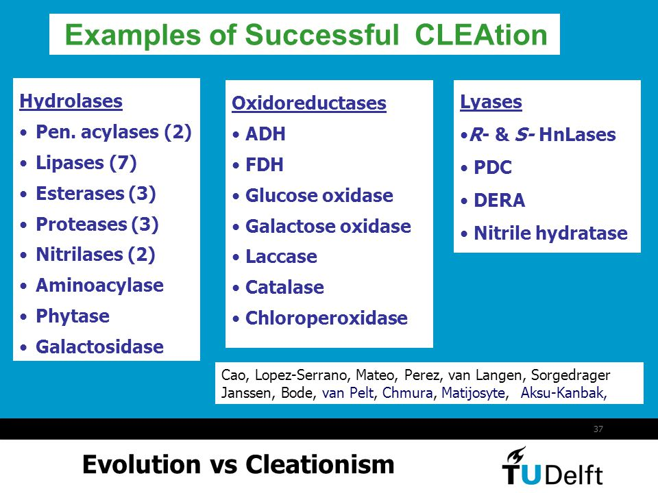 Examples of Successful CLEAtion