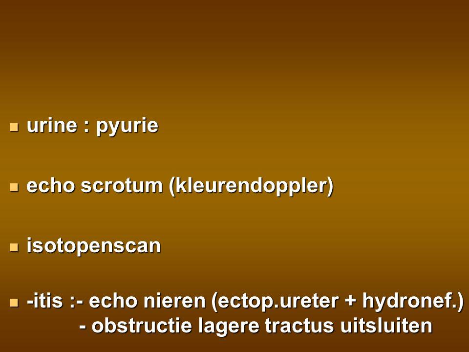 urine : pyurie echo scrotum (kleurendoppler) isotopenscan.