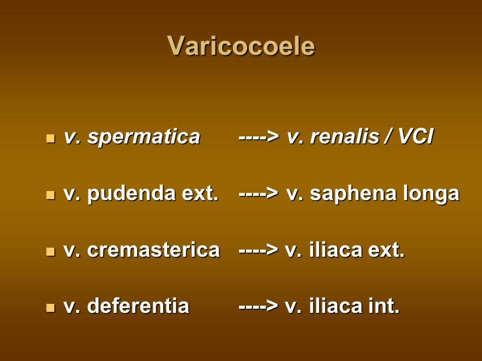 Varicocoele v. spermatica ----> v. renalis / VCI