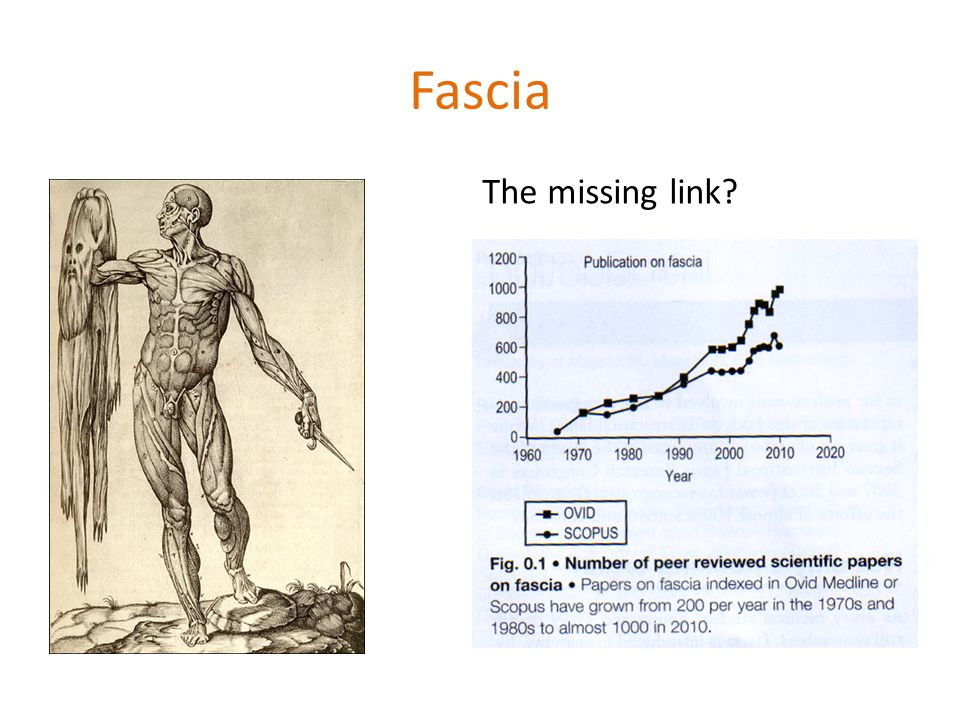 Fascia The missing link