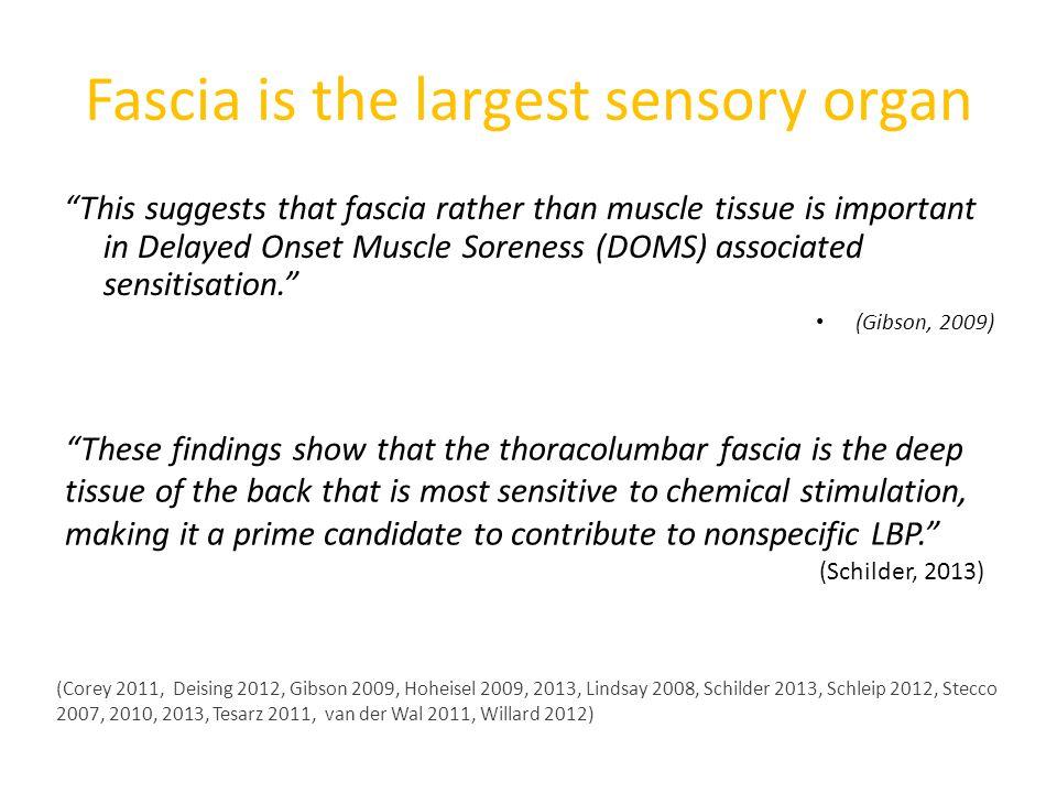 Fascia is the largest sensory organ