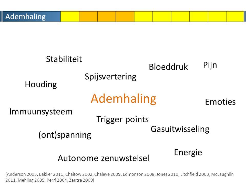 Ademhaling Stabiliteit Pijn Bloeddruk Spijsvertering Houding Emoties