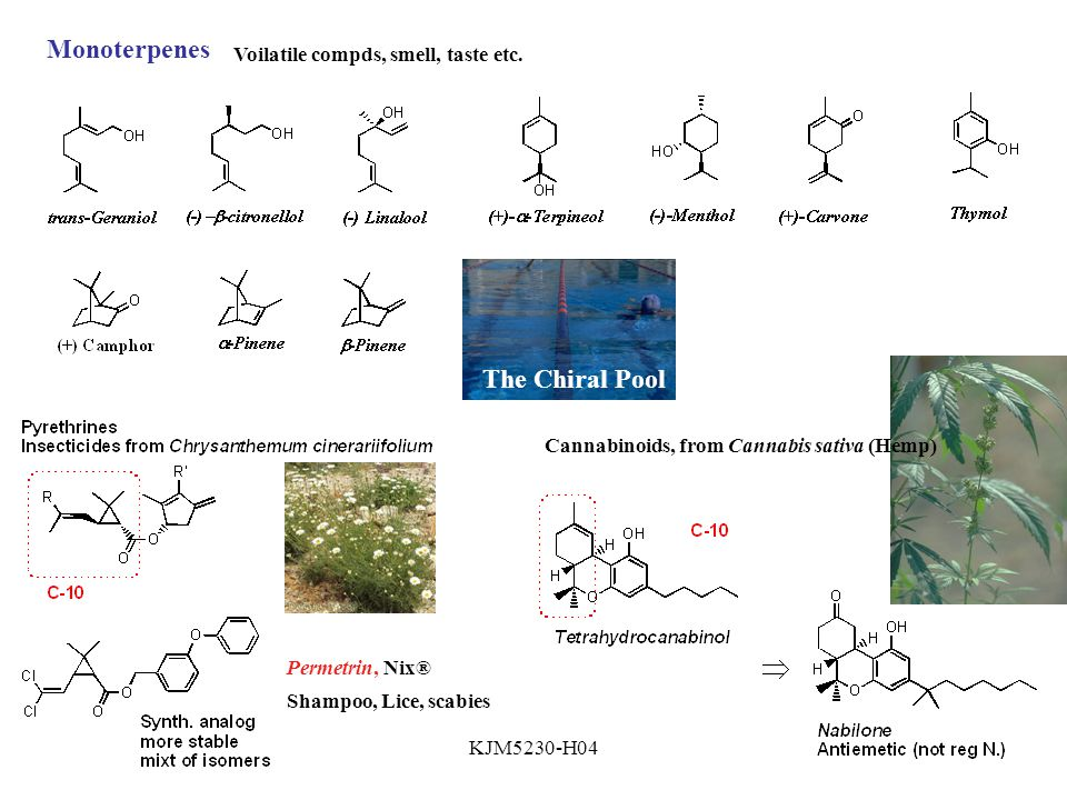 Monoterpenes The Chiral Pool Voilatile compds, smell, taste etc.