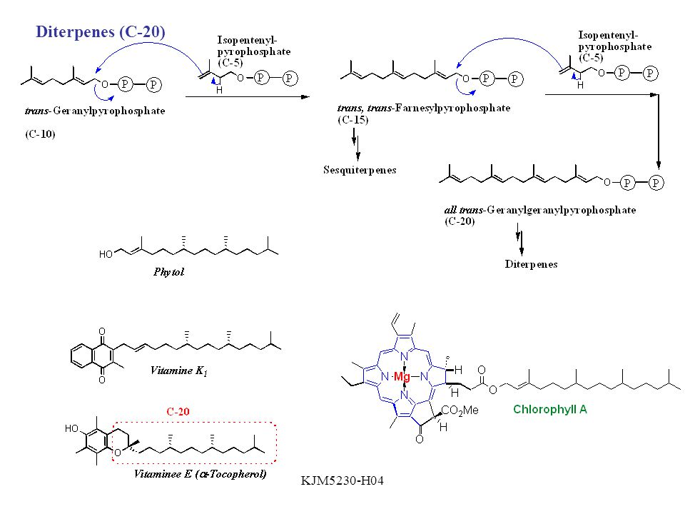 Diterpenes (C-20) KJM5230-H04