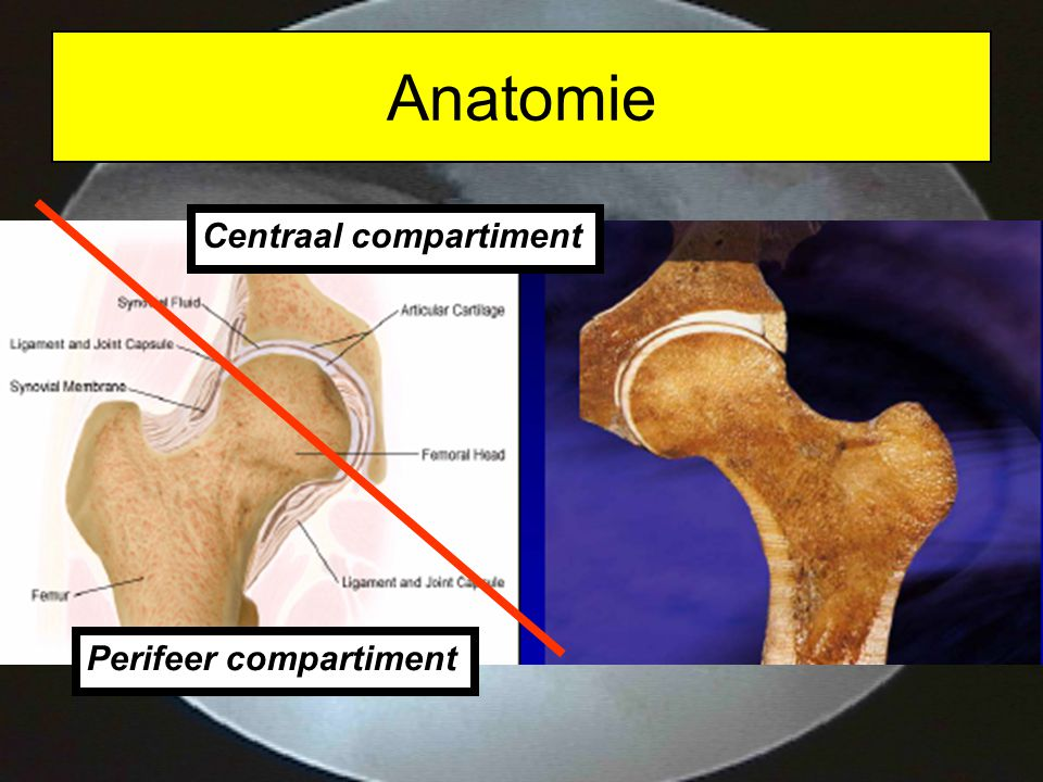 Anatomie Centraal compartiment Perifeer compartiment