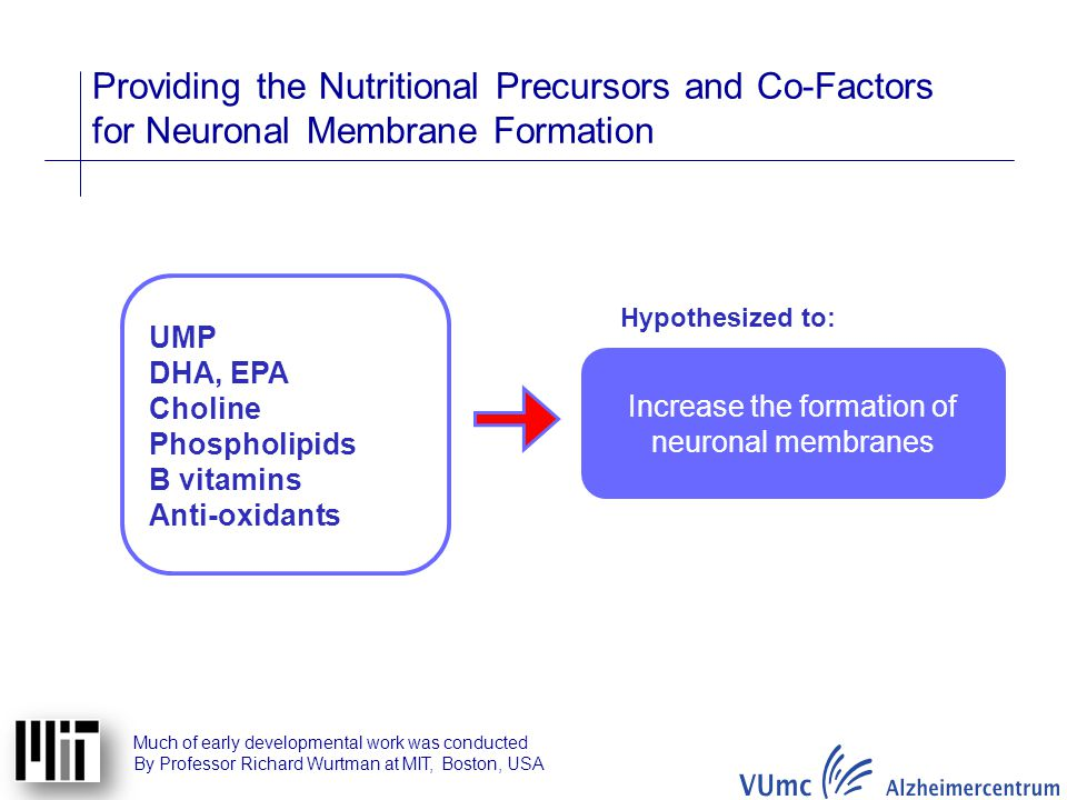 Increase the formation of neuronal membranes
