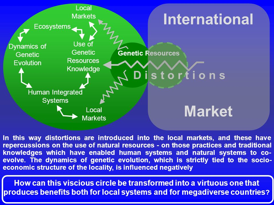 International Market D i s t o r t i o n s