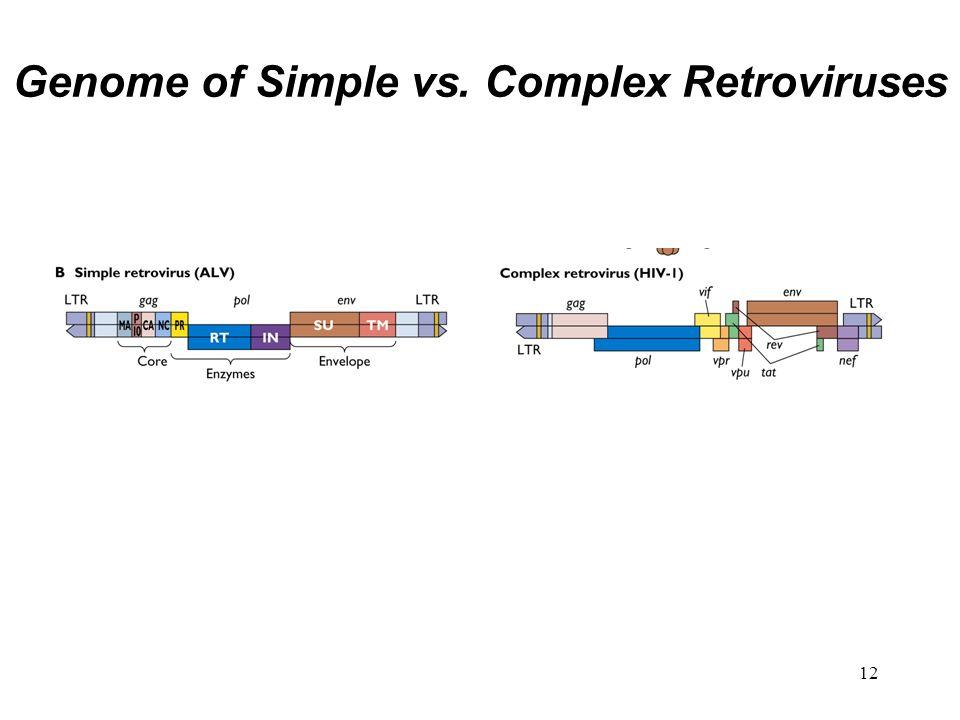 Genome of Simple vs. Complex Retroviruses