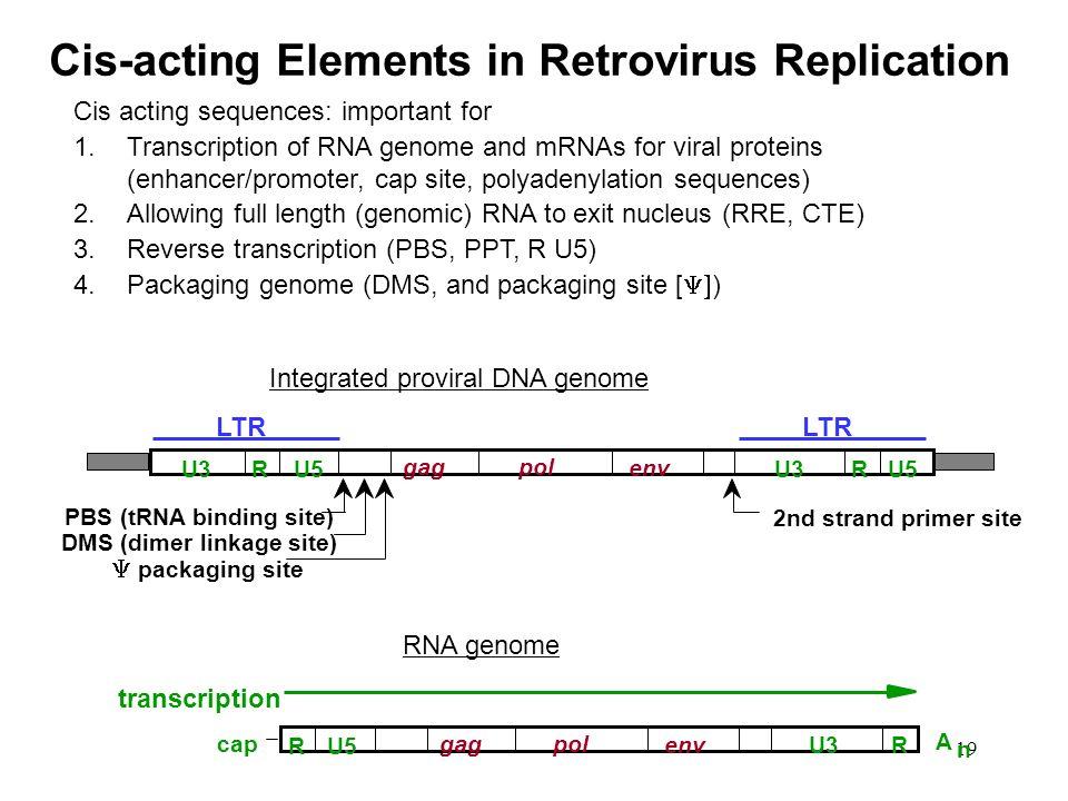 Cis-acting Elements in Retrovirus Replication