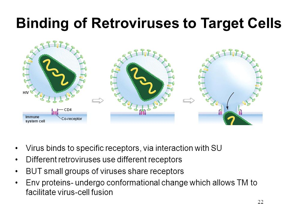 Binding of Retroviruses to Target Cells