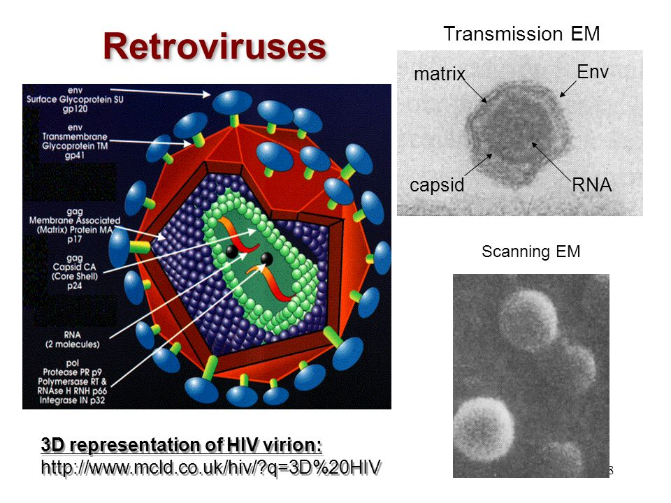Retroviruses Transmission EM matrix Env RNA capsid