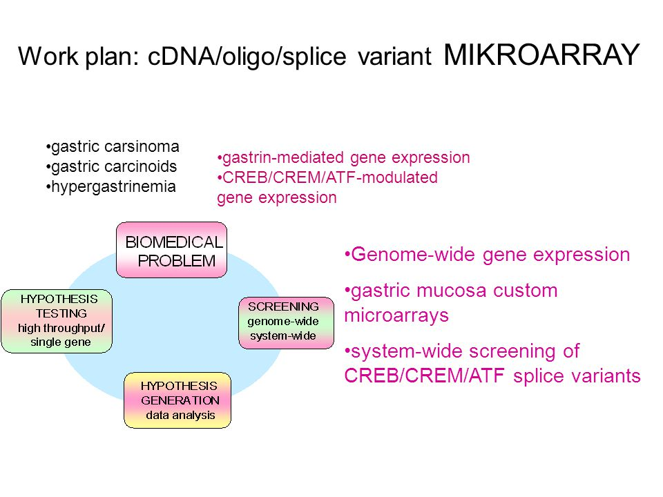 Work plan: cDNA/oligo/splice variant MIKROARRAY