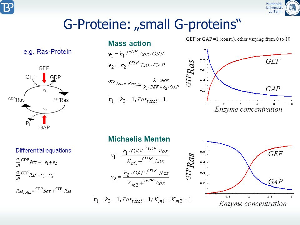 "G-Proteine: ""small G-proteins"