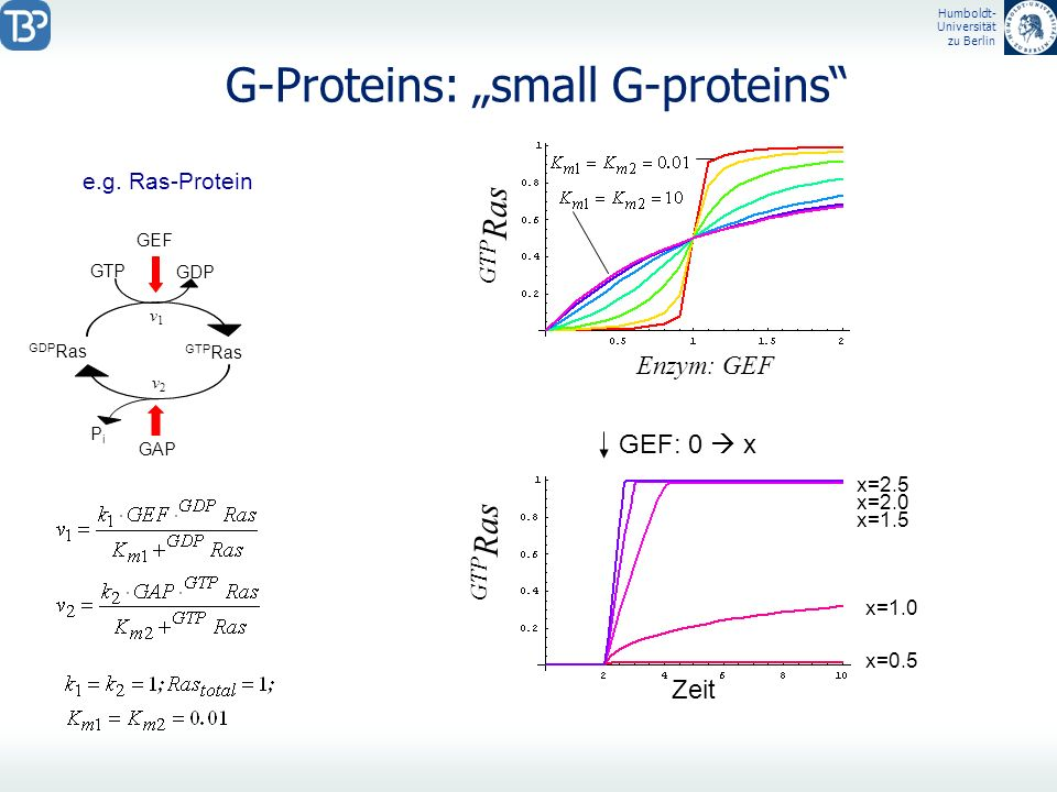 "G-Proteins: ""small G-proteins"