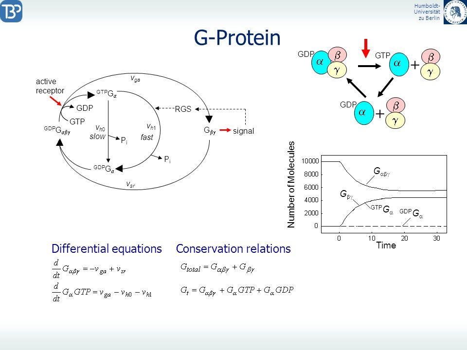G-Protein + + b a b a g g b a g Differential equations