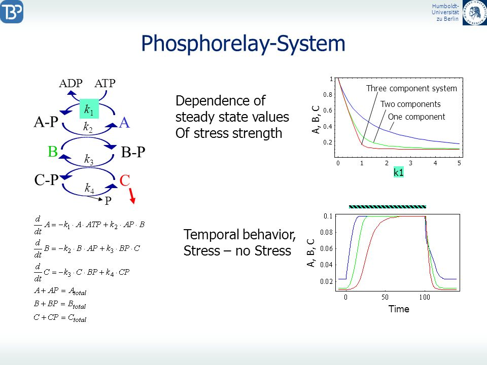 Phosphorelay-System A-P A B B-P C-P C Dependence of