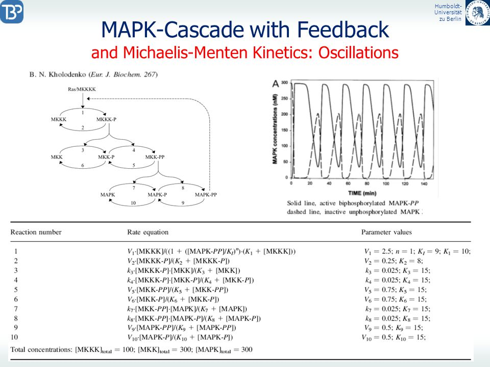 MAPK-Cascade with Feedback and Michaelis-Menten Kinetics: Oscillations