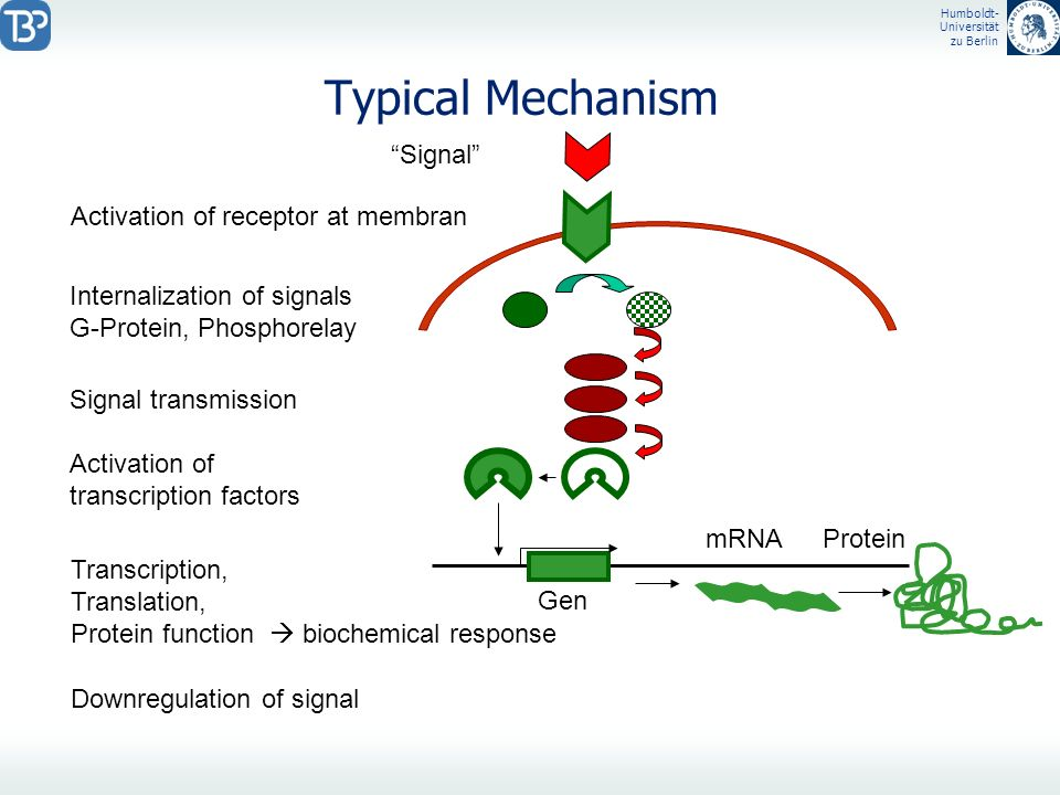 Typical Mechanism Signal Activation of receptor at membran