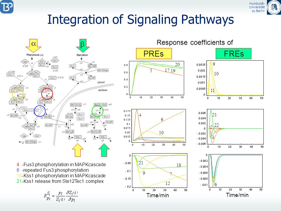 Integration of Signaling Pathways