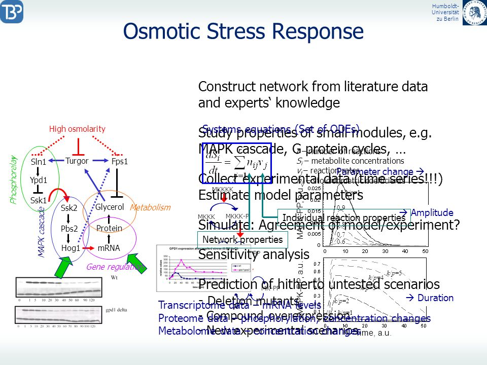 Osmotic Stress Response