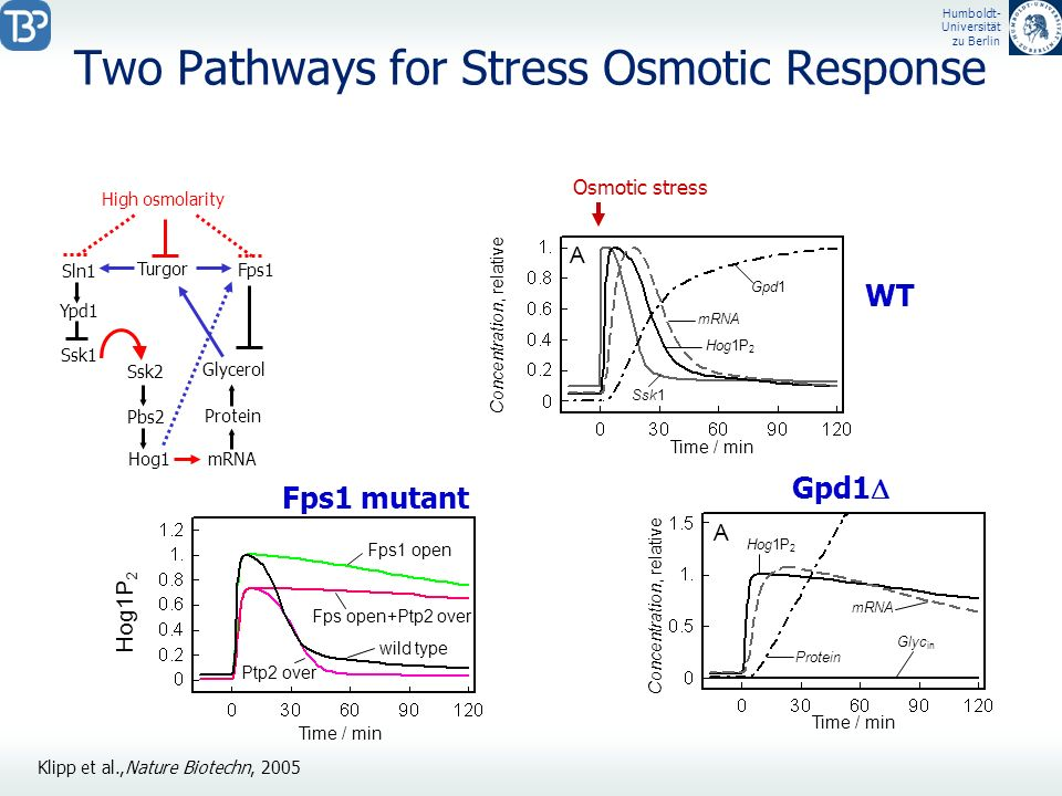Two Pathways for Stress Osmotic Response