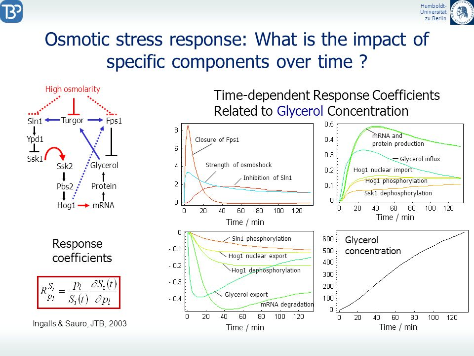 Osmotic stress response: What is the impact of specific components over time