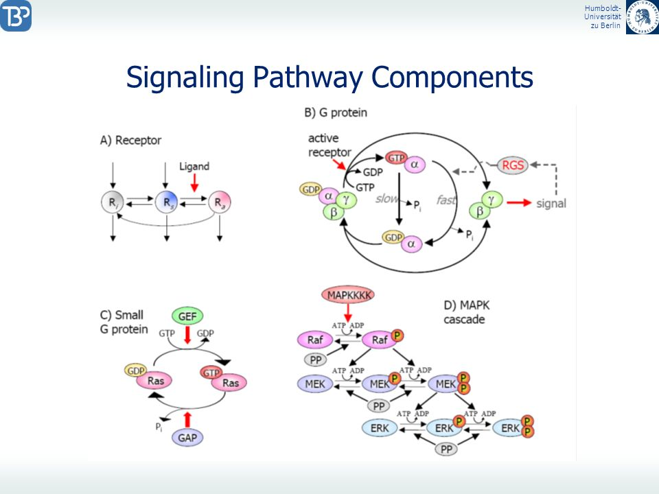Signaling Pathway Components