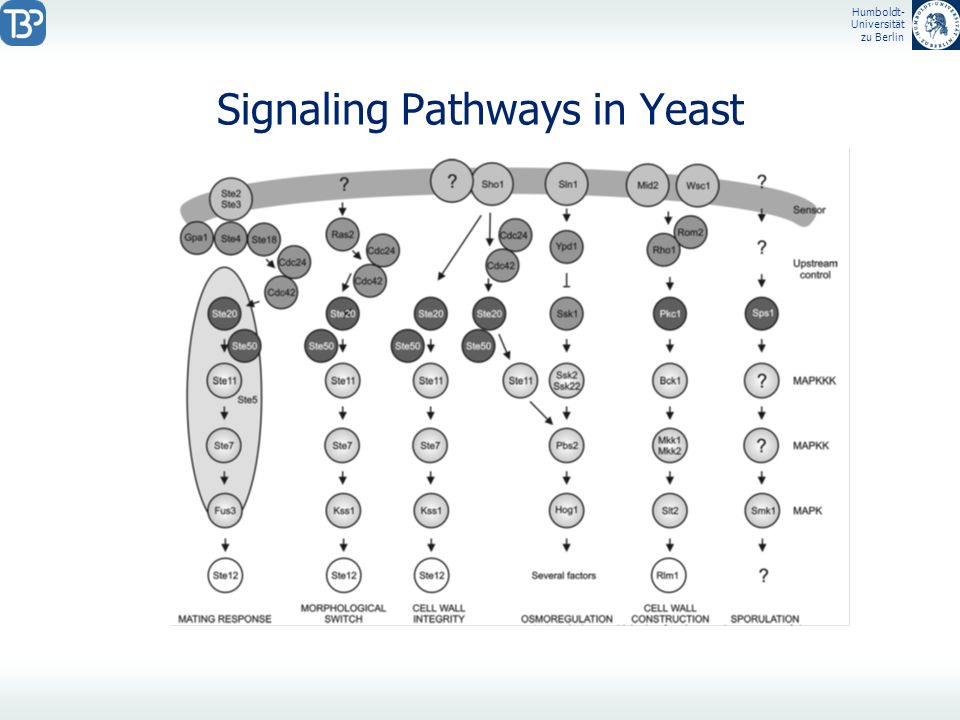 Signaling Pathways in Yeast