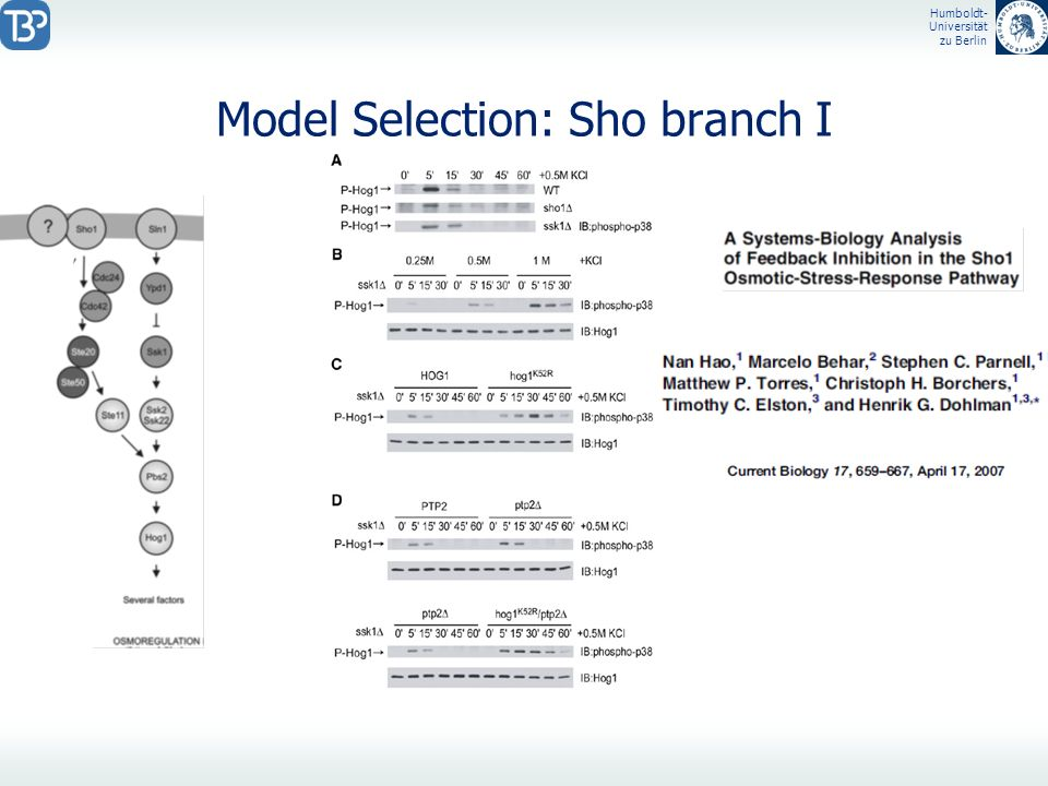Model Selection: Sho branch I