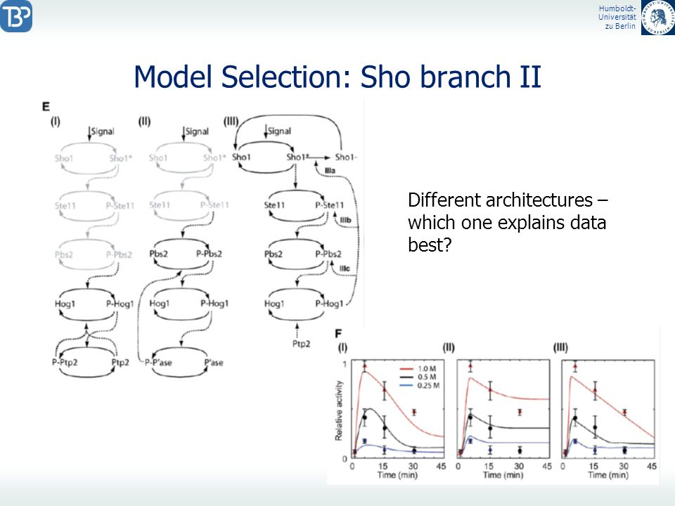 Model Selection: Sho branch II