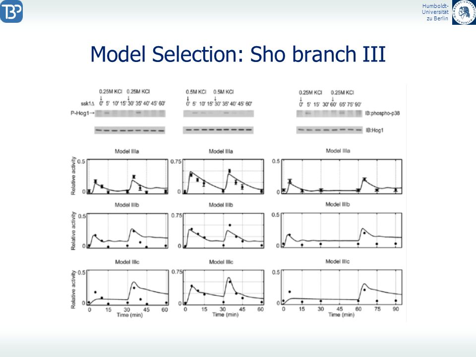 Model Selection: Sho branch III