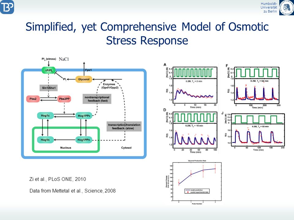 Simplified, yet Comprehensive Model of Osmotic Stress Response
