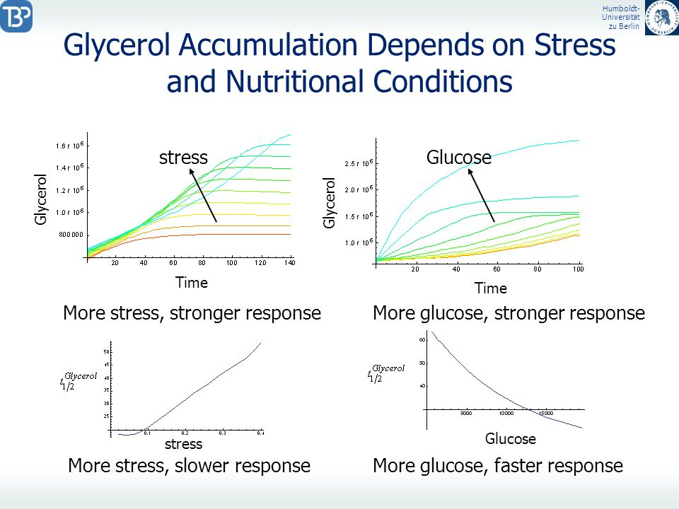 Glycerol Accumulation Depends on Stress and Nutritional Conditions