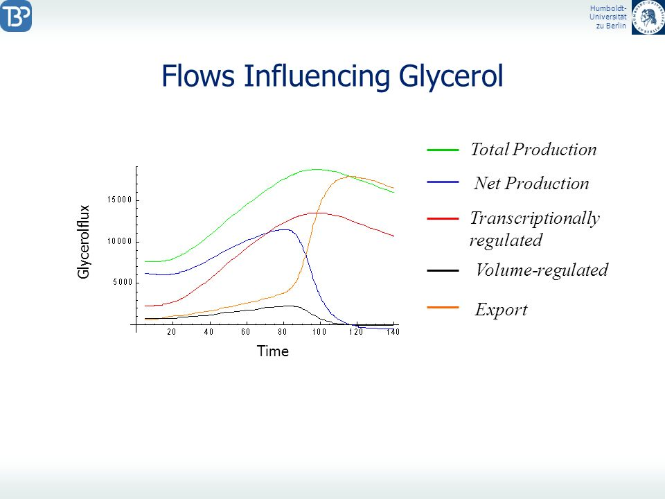 Flows Influencing Glycerol