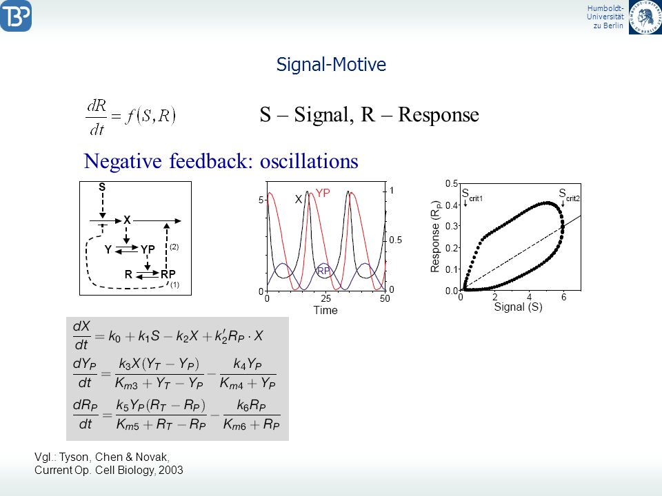 Negative feedback: oscillations