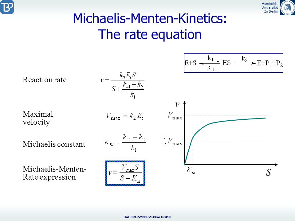 Michaelis-Menten-Kinetics: The rate equation