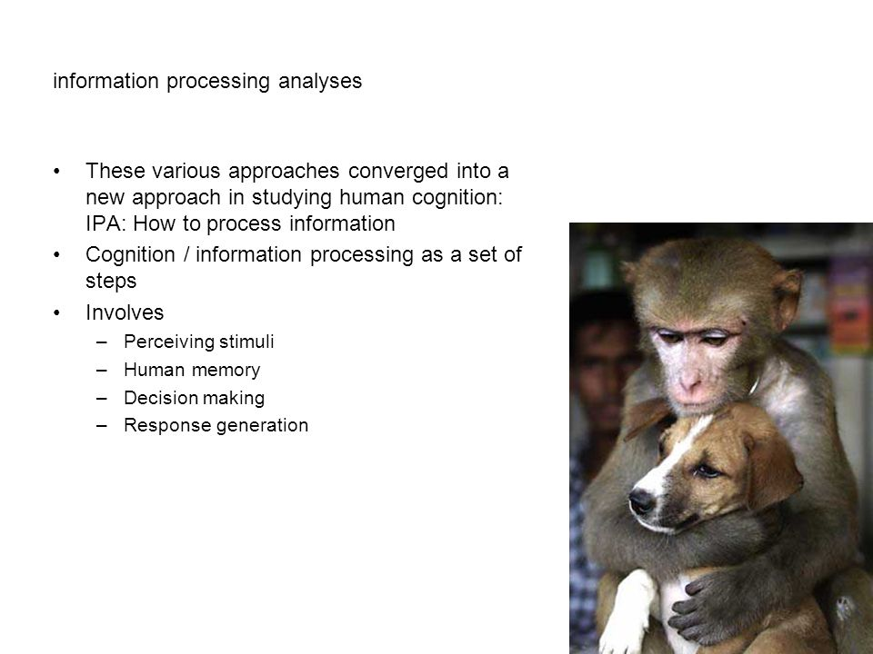 information processing analyses